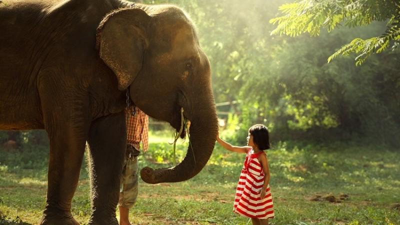 Gyvoji Žemė. Gyvūnai – Mūsų mokytojai